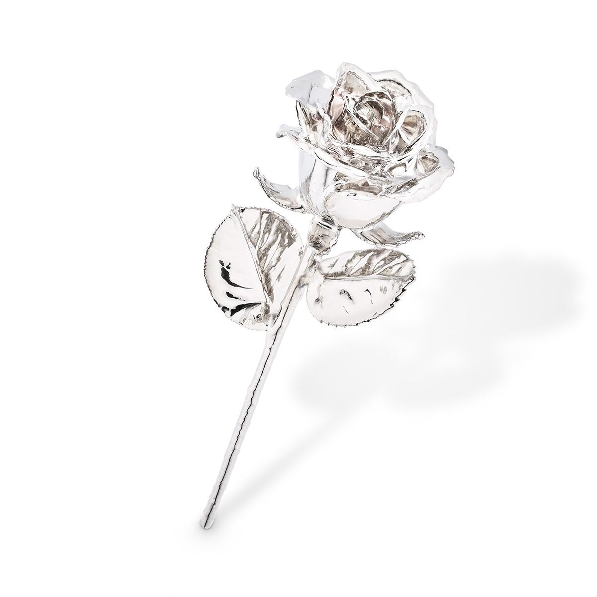 Platynowa róża