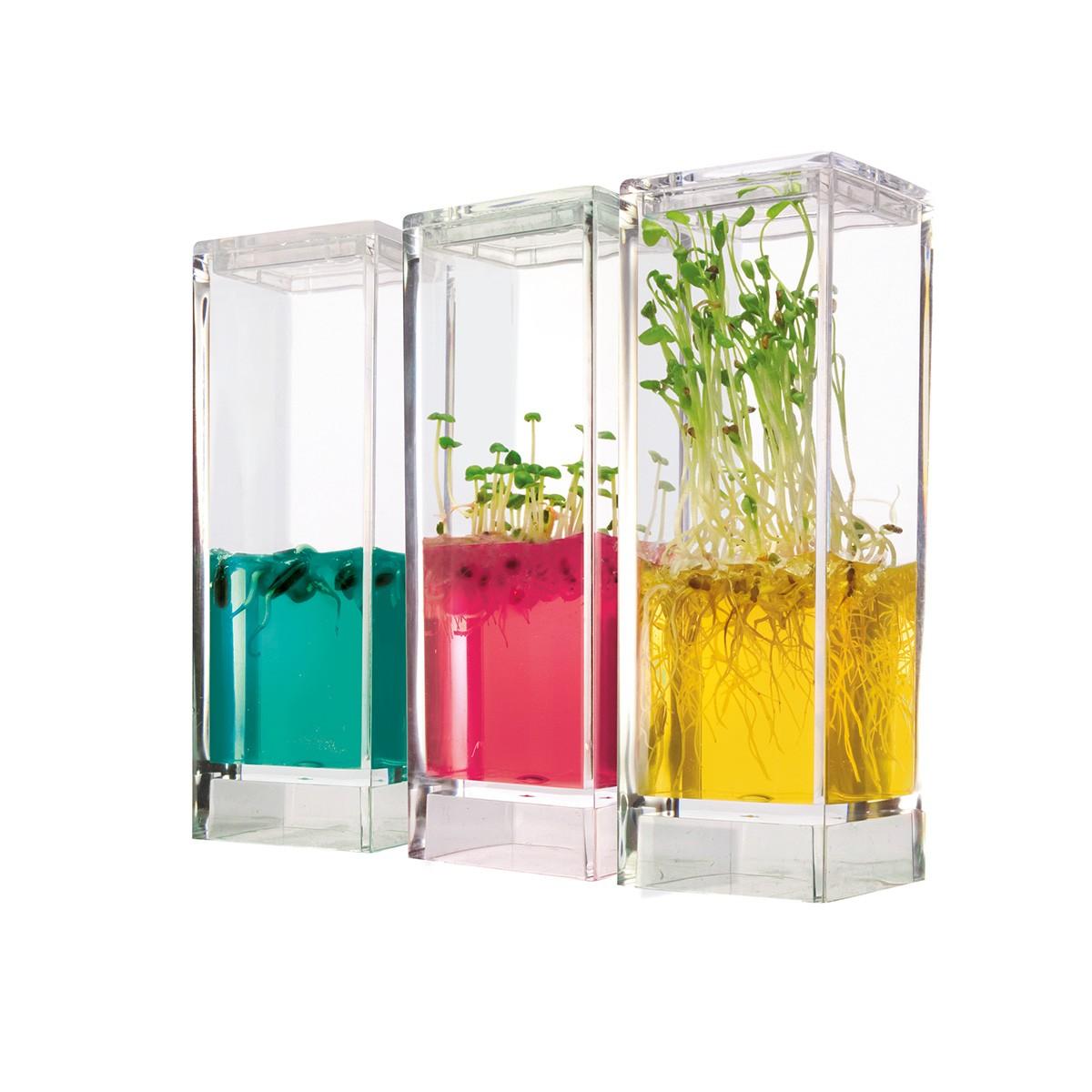 Domowe laboratorium do uprawiania roślin z odżywczym żelem